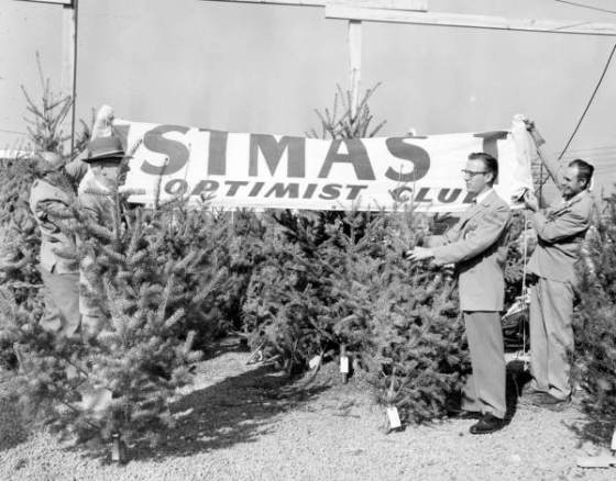 Optimist Club selling Christmas trees : Tallahassee, Florida, 1956